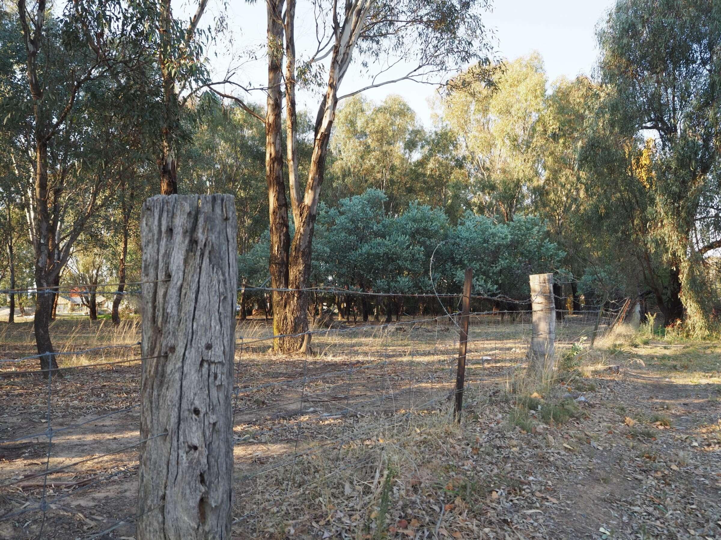 Fenced area of roadside vegetation