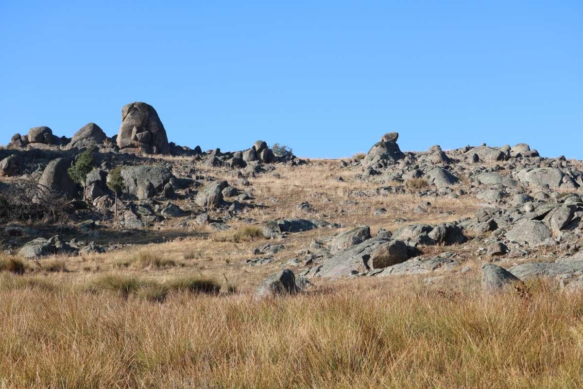 A grazed rocky outcrop