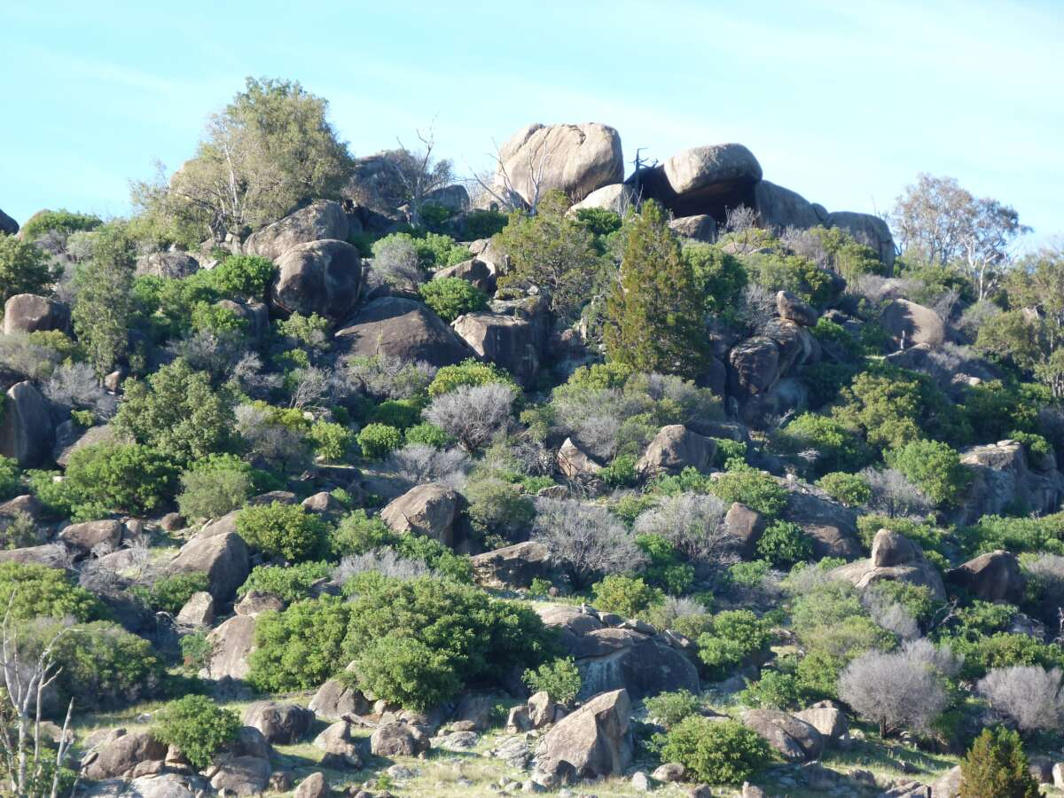 A rocky outcrop with lots of shrubs